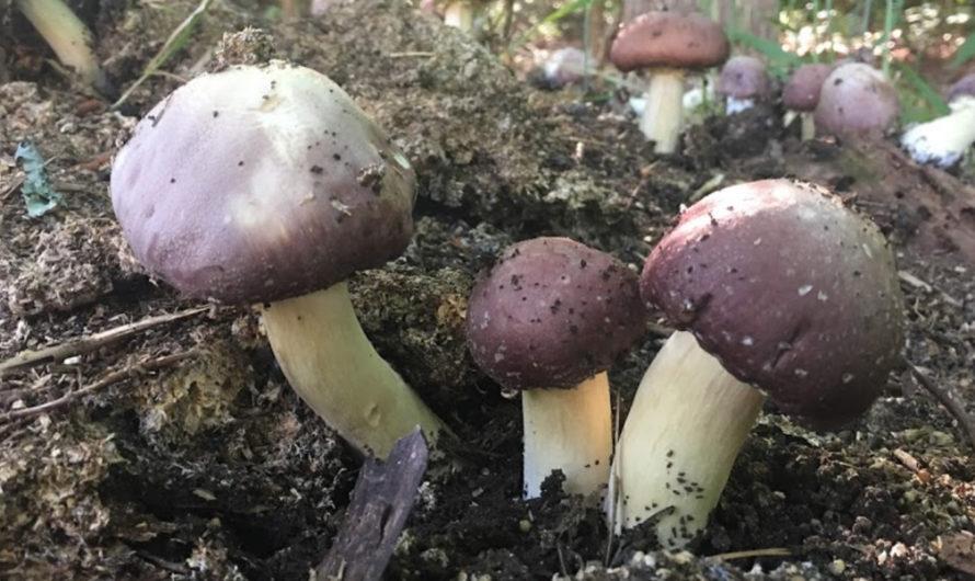 Mushroom Mountain Is an Epic Mushroom Lab South Carolina
